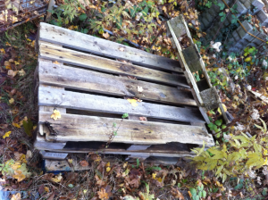 Euro pallets, decaying quite picturesque and natural