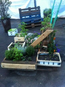 Pallet garden with potted plants, rear view
